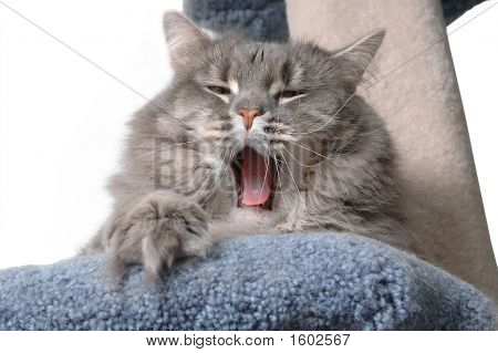 Tired Cat