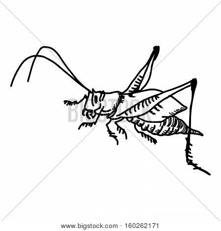 illustration vector doodles hand drawn grasshopper isolated on white