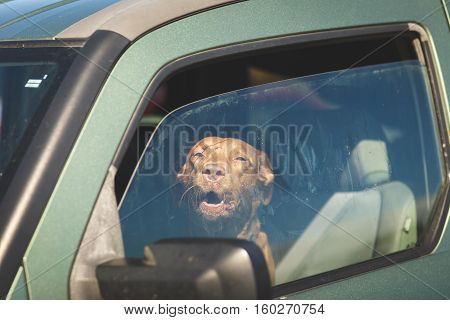 Barking dog in driver's seat of green vehicle with windows open partly.