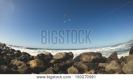 Sea birds fly over the coast with waves and rocks below. FIsheye lens view.