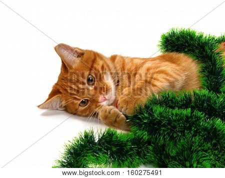Red-headed kitten lying on its side and play with Christmas decorations. Isolated on white background.