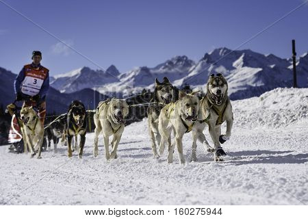 SARDIERES VANOISE FRANCE - JANUARY 20 2016 - the GRANDE ODYSSEE the hardest mushers race in savoie Mont-Blanc Daniel JUILLAGUET sweeden musher Vanoise Alps