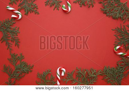 Christmas composition made of green thuja twigs and candy canes on red background. Top view, flat lay. Copy space for text. Winter holidays concept