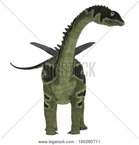 Agustinia Dinosaur on White 3D Illustration - Agustinia was a herbivorous sauropod dinosaur that lived in South America in the Cretaceous Period.