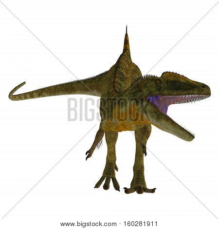 Concavenator Dinosaur on White 3D Illustration - Concavenator was a carnivorous theropod dinosaur that lived in Spain in the Cretaceous Period.