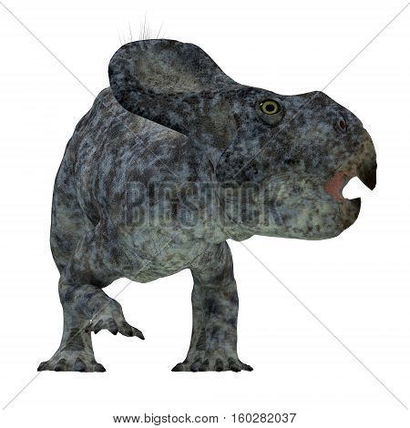 Protoceratops Dinosaur Head 3D Illustration - Protoceratops was a herbivorous Ceratopsian dinosaur that lived in Mongolia in the Cretaceous Period.
