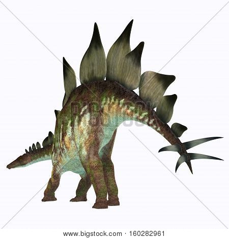 Stegosaurus Dinosaur Tail 3D Illustration - Stegosaurus was an armored herbivorous dinosaur that lived in North America during the Jurassic Period.