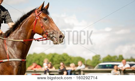 racing horse portrait close up on competition