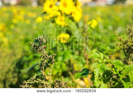 Colorful photo of ladybird and field weed