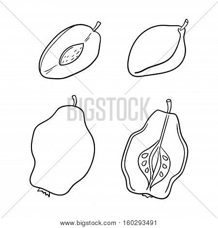 Quinces and plums isolated on white background. Vector illustration of fruits