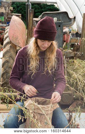 Woman Harvesting Dried Herbs