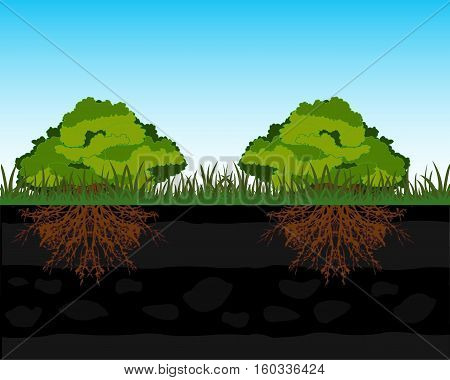 Green bush and root in ground in cut