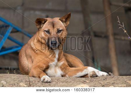 Homeless brown skin dog sitting on floor