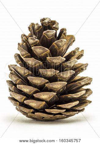 Timber softwood pine cone closeup on white background.