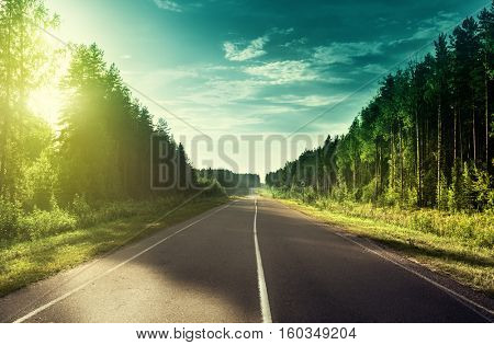 road in sunny forest