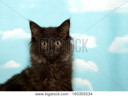 Portrait of a long haired black kitten with yellow green eyes looking directly at viewer. Blue background sky with clouds. Copy space