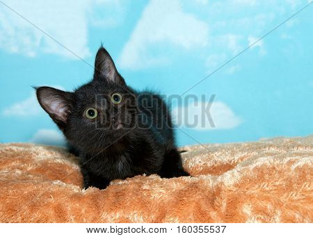 Portrait of a small black kitten with green eyes laying on caramel colored fur bed looking up to viewers right. Blue background sky with clouds. Copy space.