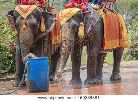 Tourists on an ride elephant tour of the ancient city in Ayuttaya Thailand.