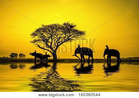 Silhouette of an elephants at safari .