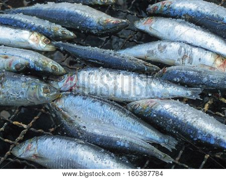 Cooking sardines for various meals in the day