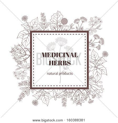Medicine herbs decorative background. Vector botanical illustration with hand drawn herbs. Medicinal herbs natural products illustration
