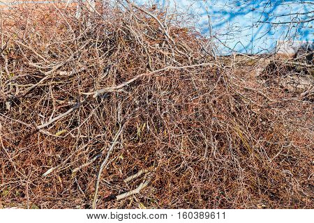 Pile Of Trimmed Branches Of Trees In Backyard