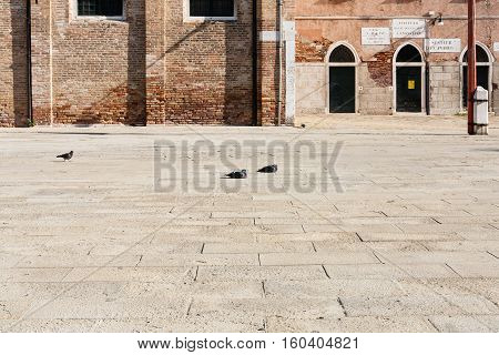 Pigeons On Square In Venice