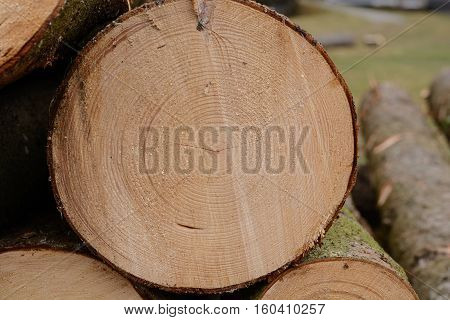 Tree cut cut surface with year rings - close-up
