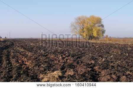 Autumn Plowed Field