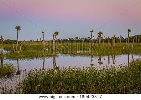 Palm Trees in a Florida Wetland at Twilight - Melbourne Florida