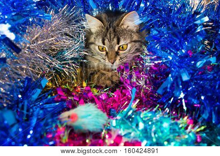Christmas Cat Looking At A Mouse.