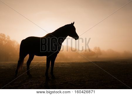 Silhouette of a horse in heavy fog at sunrise