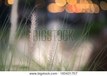 close up grassfield with bokeh light background