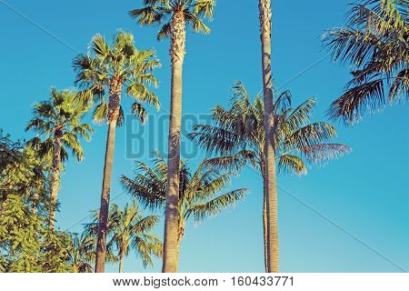 palm trees in Los Angeles in vintage tone California