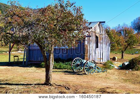 Rustic historic wooden barn besides a wooden wagon wheel and Apple Trees taken at a ranch in the rural countryside