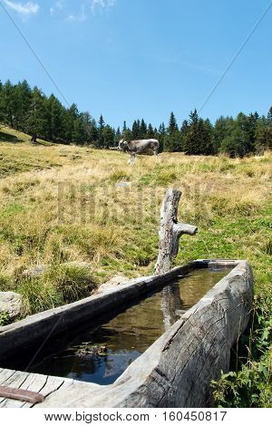 wooden trough with water in the alps