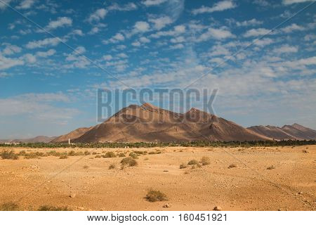 Yellow rocky desert in Morocco just with small bushes. Line of palm trees. High Atlas mountain with shadows of a clouds.