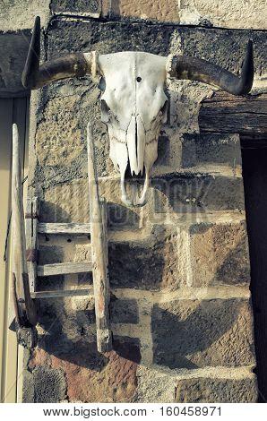 Buffalo skull on old brick wall background. Bull white scull. Instagram vintage filter look.