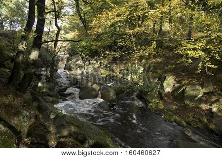 Burbage Brook flows down the forested rocky river valley of Padley Gorge, Longshaw Estate, Peak District, Derbyshire, UK