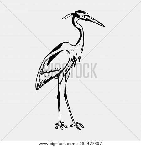 Hand-drawn pencil graphics, heron. Engraving, stencil style. Black and white logo, sign, emblem, symbol. Stamp, seal. Simple illustration. Sketch.