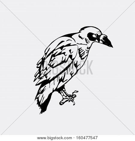Hand-drawn pencil graphics, bird, raven, crow, rook. Engraving, stencil style. Black and white logo, sign, emblem, symbol. Stamp, seal. Simple illustration. Sketch.