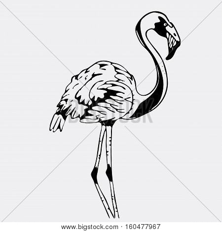 Hand-drawn pencil graphics, bird, flamingo. Engraving, stencil style. Black and white logo, sign, emblem, symbol. Stamp, seal. Simple illustration. Sketch.