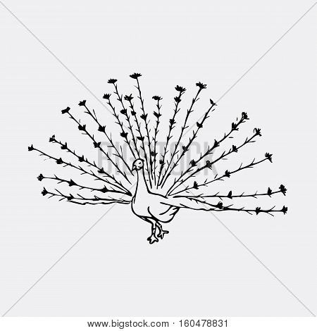 Hand-drawn pencil graphics, peacock bird. Engraving, stencil style. Black and white logo, sign, emblem, symbol. Stamp, seal. Simple illustration. Sketch.