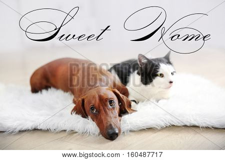 Dachshund dog with cute cat lying on rug. Text SWEET HOME.