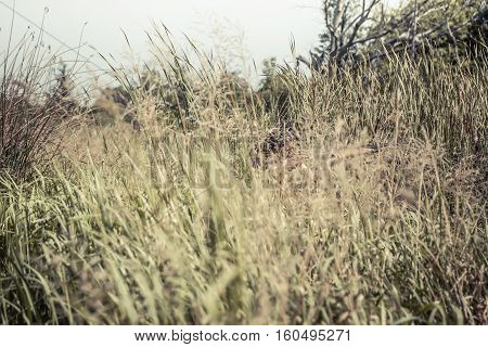 Hunting scene with hunter man aiming in tall grass in ambush with shotgun during hunting season
