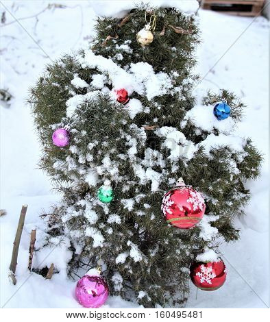 The Christmas spruce. Spruce grows in the garden. She is still small. On it hung Christmas decorations. Now, she's beautiful. Snow lies on the spruce. It looks wonderful with toys. We are ready to meet Christmas.