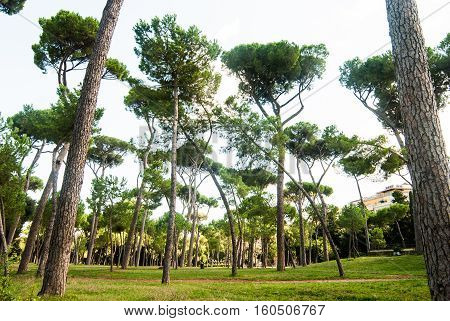 Parco Del Colle Oppio - A park in Rome's historical center near the Colloseum.