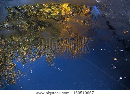 Reflection of a tree with autumn leaves in a puddle in a driveway