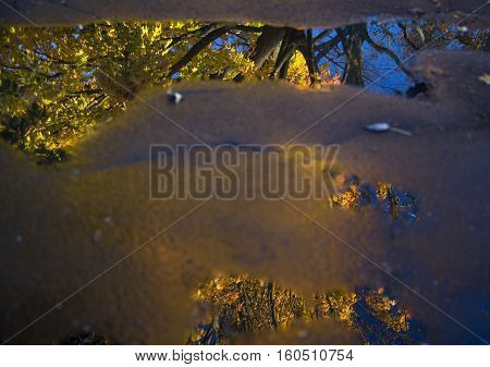 Colorful maple tree with blue sky reflected in puddle in driveway