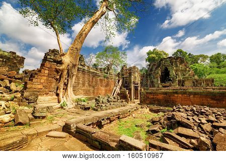 Green Tree Growing Among Ruins Of Preah Khan Temple In Angkor